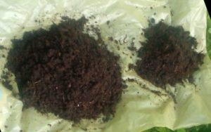 Wurmhumus ernten