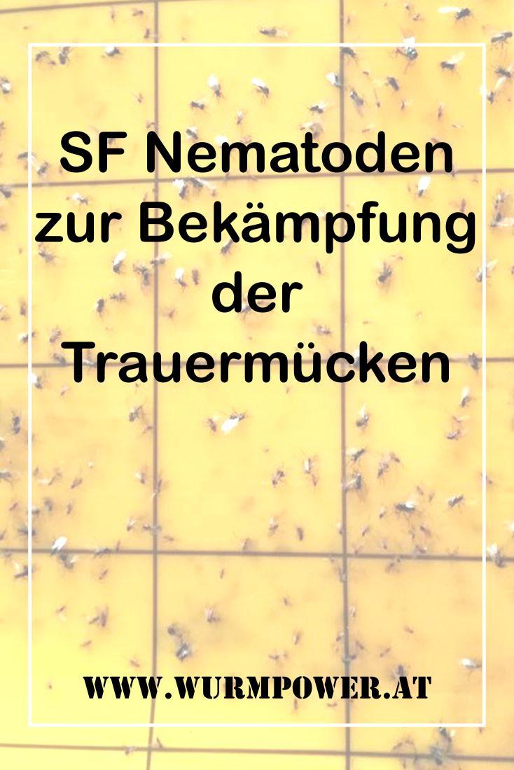 SF Nematoden gegen Trauermücken