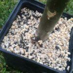 perlit-wurmpower
