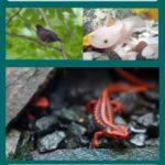 Kompostwürmer als ein wertvolles ergänzendes Futter. Für Amseln, Chinesische Krokodilmolche, Axolotl oder Süßwasserrochen.